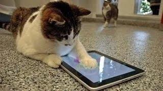 Videos De Risa De Gatos Chistosos Jugando Con El Ipad