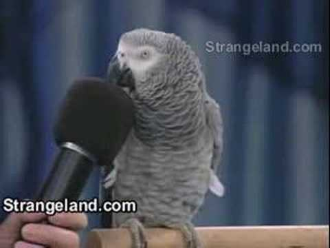 parrot - A Parrot who can do very much unbelievable sounds!!!