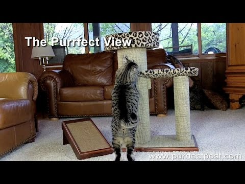 The Purrfect View Cat Scratcher by Purrfect Post