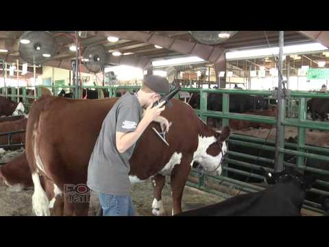 DocTalk: Fair and show season