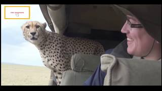 Download Video Stupid Humans vs Smart Wild Animals MP3 3GP MP4