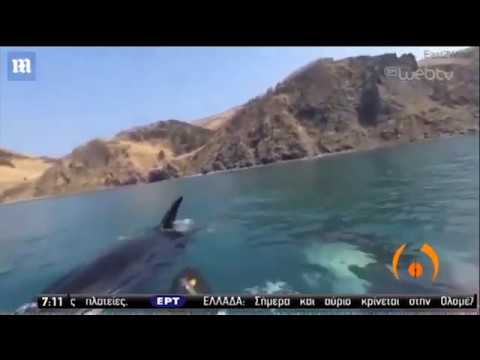 «Φάλαινες-δολοφόνοι» περικυκλώνουν κωπηλάτες   19/05/2020   ΕΡΤ