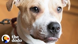 Pit Bull Puppy Keeps Waiting For A Family To Love Her | The Dodo by The Dodo