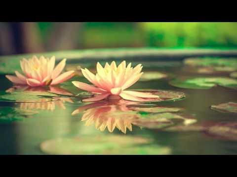 Stagno in vaso per i fiori di loto: come fare