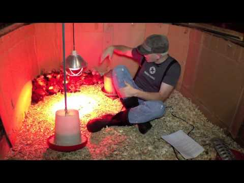 Raising Chickens: Making a Brooder and Raising Baby Chicks