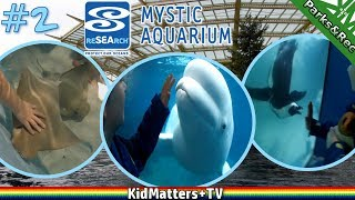 """More Sea Life! A day tour of Mystic Aquarium. Part 2. Tragen and Roxy have fun seeing sea animals and creatures at the Mystic Aquarium [CT]. This is Part 2, outside videos with the Beluga whales, penguins, and stingrays. All shot with 4K action cam.Part 1: https://youtu.be/3MwPf-BrkjIThis was back at the end of March. It was free admission for Connecticut Science Center members.Per wikipedia:""""Mystic Aquarium is an aquarium in Mystic, Connecticut. The Aquarium is one of three U.S. facilities holding Steller sea lions and it has the only beluga whales in New England. Special exhibits include a ray and shark touch pool, an African penguin exhibit, a jelly gallery, and an """"Exploration: Wild"""" ecosystems exhibit.""""https://www.youtube.com/user/MysticAquariumhttp://www.mysticaquarium.org/Thanks for Watching another fun family friendly video. See you in the next video!https://www.youtube.com/c/KidMattersTVSubscribe for more, it's FREE! And Never Miss a video by Hitting that Bell Icon!▶︎https://www.youtube.com/channel/UCkpFfjCLRUX9E62zJ1-r4Gg?sub_confirmation=1Watch More, from our Playlists:▶︎All of our Videos: https://www.youtube.com/watch?v=4E2cWLOC2dw&list=PLoGP4ZDuz55xoJH1gH43uXZI-Sfh3PEKC▶︎All Gaming videos:  https://www.youtube.com/watch?v=PVmm3qh-Cp4&list=PLoGP4ZDuz55yB7UnR0PN3pS1Tw1GnR2vM▶︎All Roblox videos:  https://www.youtube.com/watch?v=f4XLtgl_OIo&list=PLoGP4ZDuz55wkJO8KIVGWn2W3PBlDmKpH▶︎All LEGO videos: https://www.youtube.com/watch?v=KqbvsQJvf84&list=PLoGP4ZDuz55yscyKKZBNewnsXimqk6AzG▶︎Parks&Recreation: https://www.youtube.com/watch?v=Kg9RFYsKasY&list=PLoGP4ZDuz55wbH7DnaTgQnLKecpDG6AU9▶︎Cooking: https://www.youtube.com/watch?v=b-E5-OvouUI&list=PLoGP4ZDuz55yeLYlG-vigbgrMWaWEr2pi▶︎Crafts: https://www.youtube.com/watch?v=nF2-3Tga7Ec&list=PLoGP4ZDuz55yElwbu0g_2Nt-m77JN5Ban▶︎Reviews: https://www.youtube.com/watch?v=dPDhgmQ2rco&list=PLoGP4ZDuz55zP5Gdy9GGKfk3L5mR0H_reFollow Us On Social Media:▶︎Twitter: https://twitter.com/KidMatters_TV▶︎Facebook: https://www.facebook."""