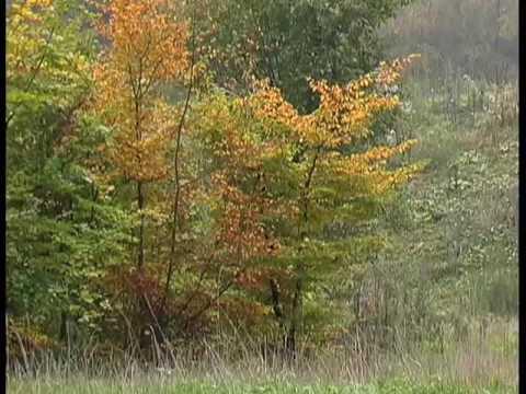 ANTONIO VIVALDI - Cztery Pory Roku: Jesień