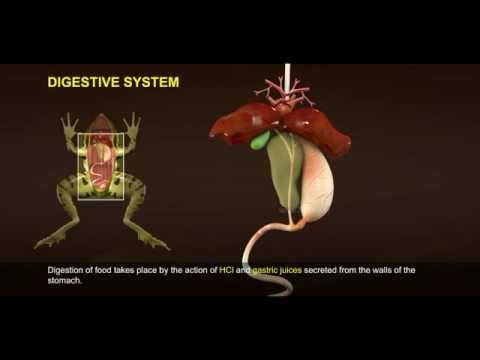 1 Morphology and Digestive System of Frog 512 1