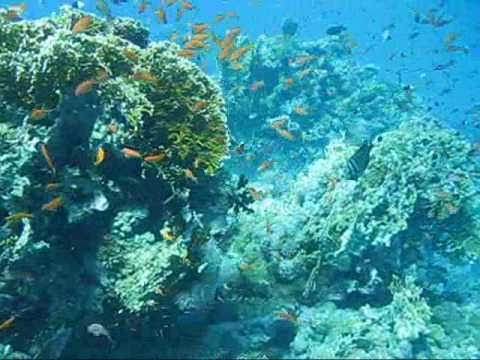 Vörös- tenger- Red Sea/ Sas Rája- Eagle Ray/ Love theme-Pearl Harbor