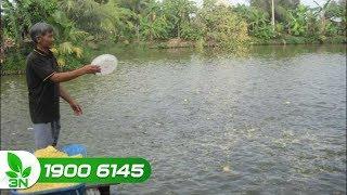 Lưu ý khi sử dụng bã đậu cho cá ăn