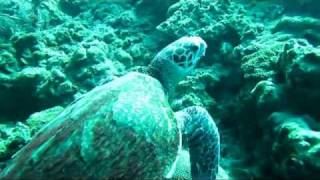 Scuba Diving Ko Lanta Thailand - Feeding Turtle