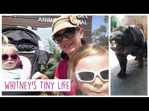 Sad Anniversary and Trip to the Zoo | Week in the Life | Whitney's Tiny Life