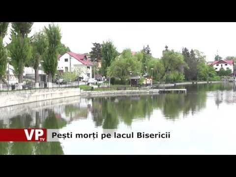 Pești morți pe lacul Bisericii