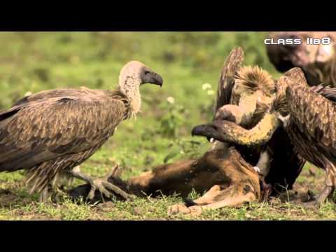Tập tính di cư của động vật