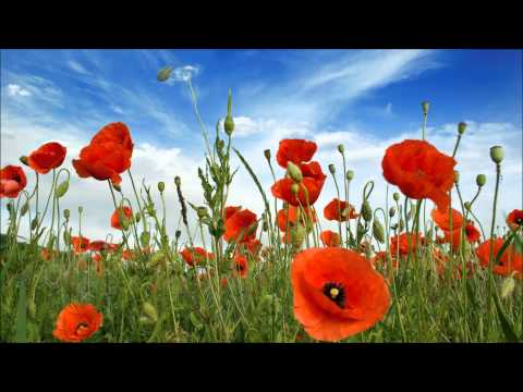 Geoff Stephens - In Flanders Fields