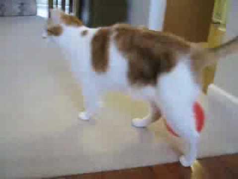 Statická elektřina - Kočka vs. balónek