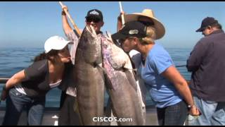 Aloha Spirit Sportfishing Fishing White Seabass  - Channel Islands Sportfishing - Ventura County