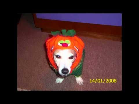 Mode für kleine und große Hunde