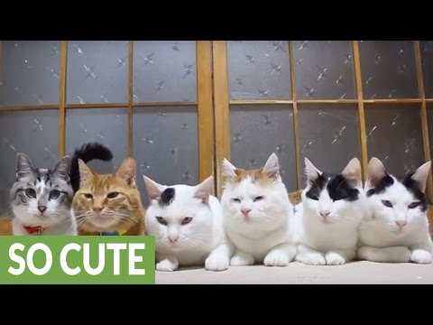Watch Six Cats Share a Delicious Snack of Leaves