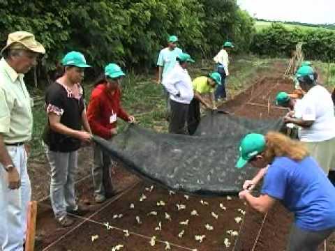 Curso de horta e cultivo orgânico