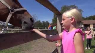 Poletni tabor s konji