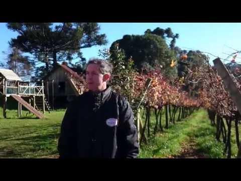 Conhecendo a vinícola Tonet e o processo de fabricação do vinho