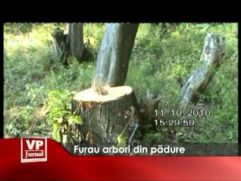 Furau arbori din padure