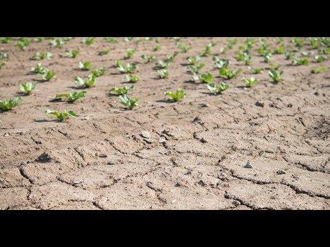 Dürre in Deutschland: Klimaforscher erwarten zukünftig häufiger Extremwetter