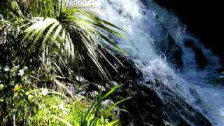 Ngaruawahia New Zealand  city images : FIREWOOD CREEK WATERFALL NGARUAWAHIA, NEW ZEALAND