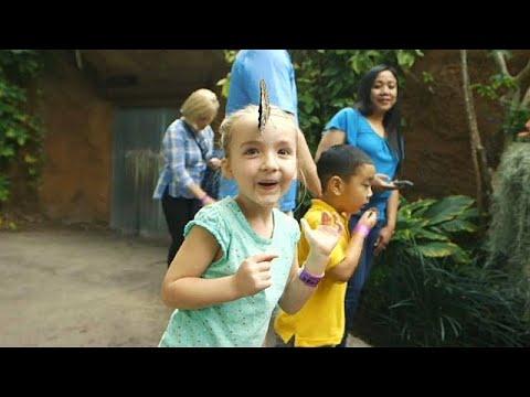 San Diego/USA: Schmetterlings-Dschungel im Zoo San Di ...