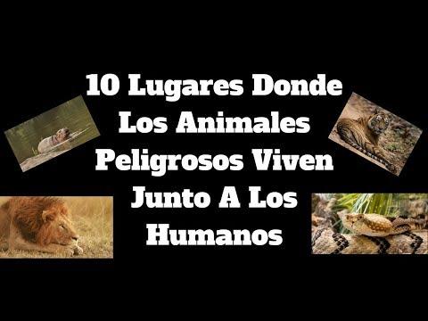 Poemas para enamorar - 10 Lugares Donde Los Animales Peligrosos Viven Junto A Los Humanos