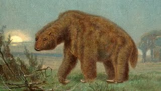Extinct Animals That Might Still Be Alive! by Epic Wildlife