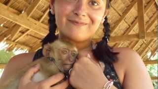 Affen Baby Streicheln Auf Koh Lanta Thailand Juli 2011 Part 2