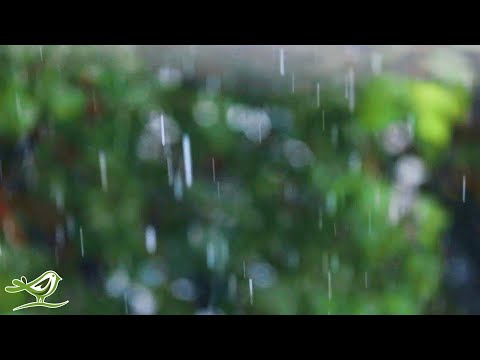 Relaxing Music & Soft Rain Sounds - Peaceful Piano Music for Sleep & Relaxation