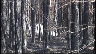 Wildfire Near Tomcat Road in Etowah County