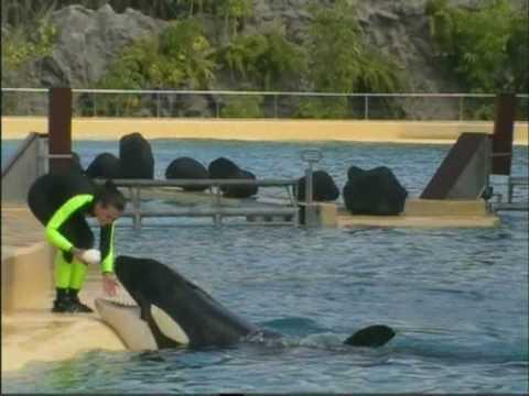 Tenerife 2010. – Kardszárnyú delfin-show és fóka-show