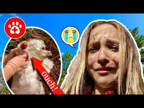 SOMETHING TERRIBLE HAPPENED TO MY DOG TOBY!! **I CRIED!** SO EMOTIONAL!! #lostdog #lillyK