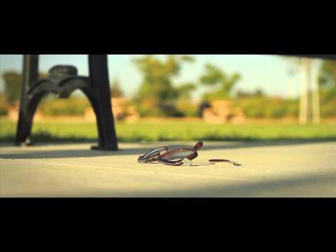 Faith: We walk by faith, not by Sight – (A short film)