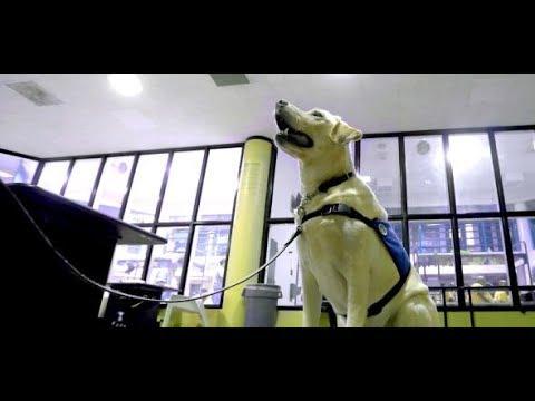Cannabis-Legalisierung: Drogenhunde in Kalifornien  ...