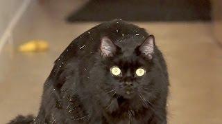 【岐阜県】猫動画フェスが日本にもやってくる