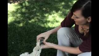 Dog Grooming Care. Tips&Tricks For Grooming&Brushing Your Dog