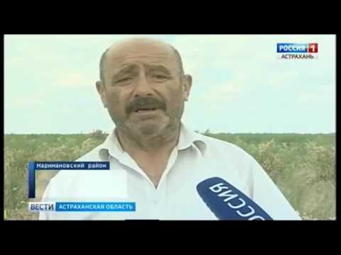 Об угрозе опустынивания земель в Астраханской области