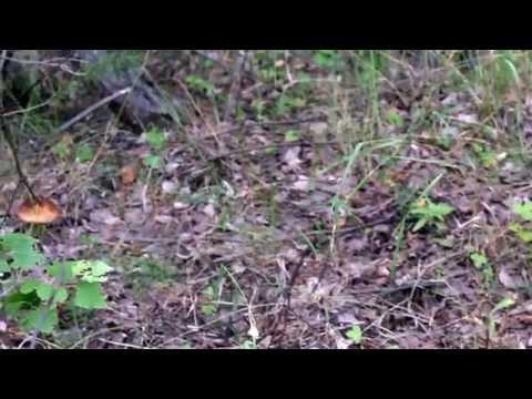 Природа сибири