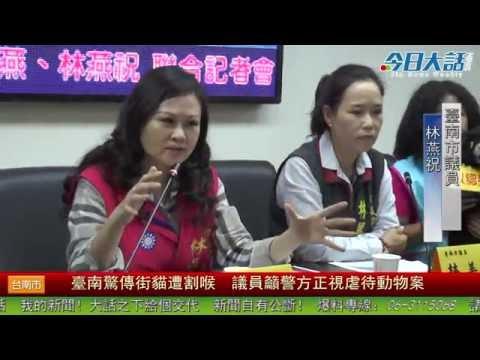 臺南驚傳街貓遭割喉 議員籲警方正視虐待動物案