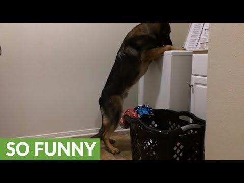 il-cane-che-aiuta-a-fare-il-bucato