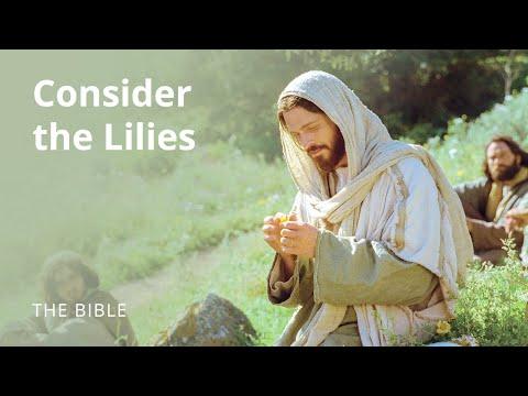 Seek Ye the Kingdom of God