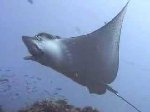 Las Galápagos bajo el agua