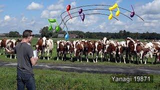 Gość rozwalił system – zaklinacz krów powraca i daje kolejny koncert na polanie