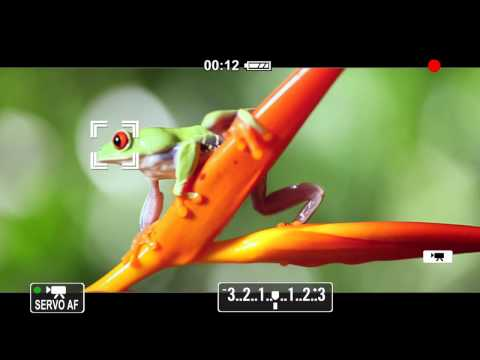Canon EOS 650D Commercial (Serviced by P for Production, UK)