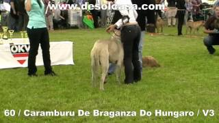 Anif Austria  City new picture : World Club Show Fila Brasileiro 19-5-2012 Anif Austria